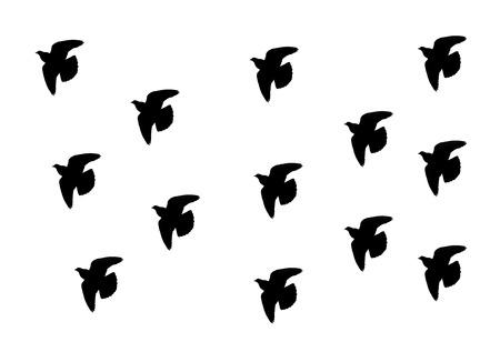 cuervo: Una bandada de cuervo silueta sobre un fondo blanco