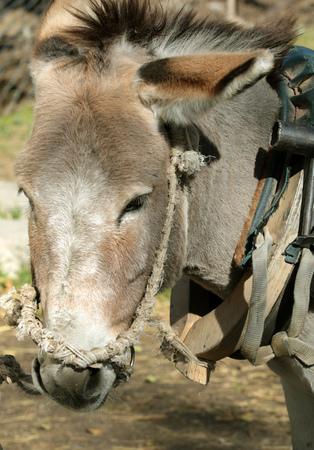 grosse fesse: ass animal dans la nature Banque d'images