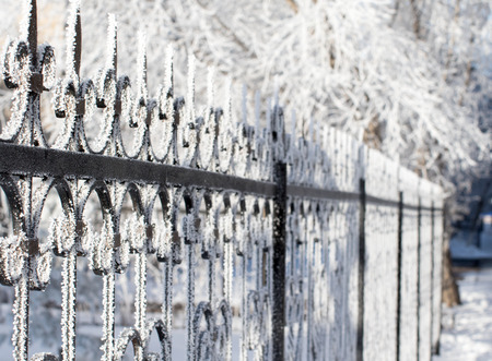 frost bound: metal decorative fence in the snow