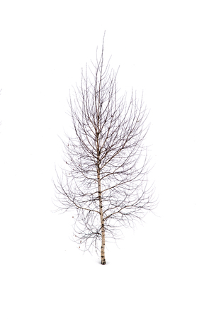 depressive: silhouette of trees on a white background Stock Photo
