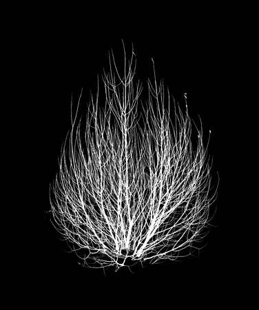 silhouette of trees on a black background