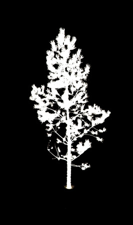 depressive: silhouette of trees on a black background