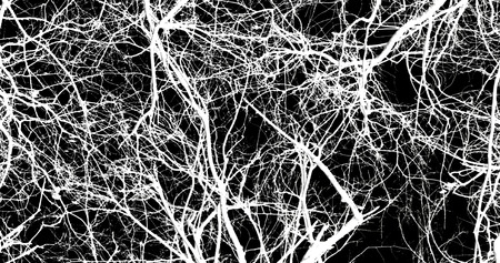 terrify: abstraction, white tree branches on a black background Stock Photo