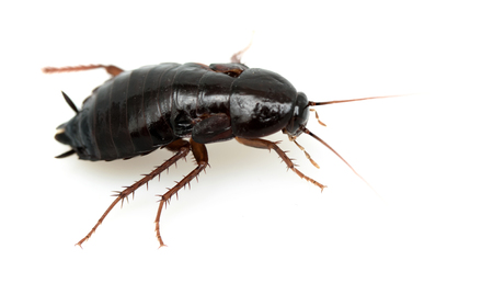 exterminate: cockroach on a white background