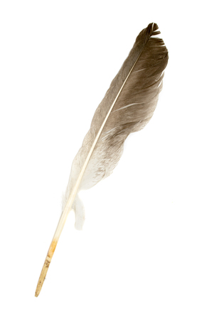 lightly: feather of a bird on a white background