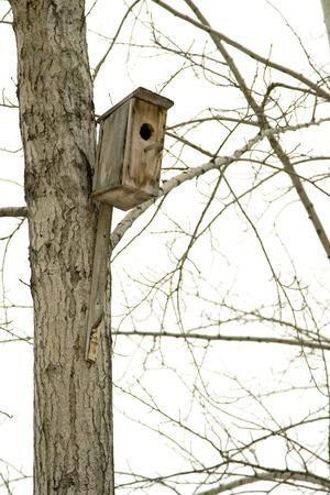wintering: birdhouse on the tree winter