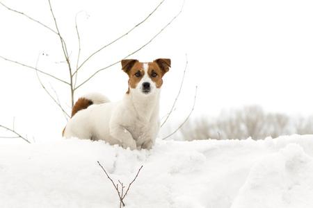 perros graciosos: perro al aire libre en invierno