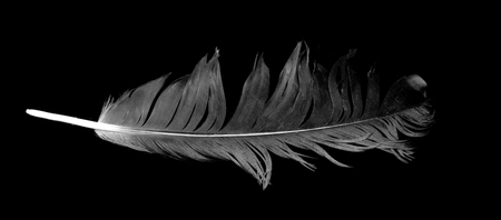 black feather: bird feather on black background