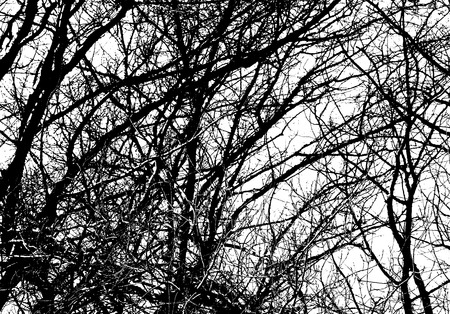 wizened: tree branches on a white background