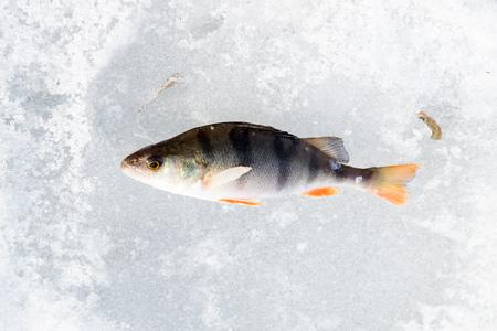 jigging: Winter fishing, fish on ice