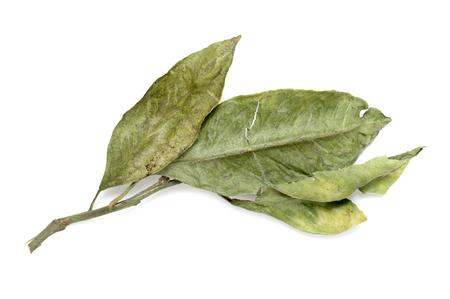 seasoning: dry bay leaves on white background, seasoning