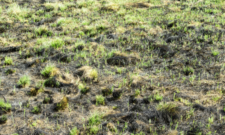burned: Burned grass landscape