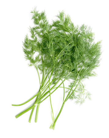 dill: green dill isolated on white