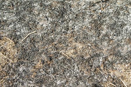 la quemada: Paisaje de hierba quemada