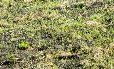 quemado: Paisaje de hierba quemada