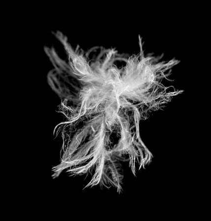 weightless: white feather feathers on a black background