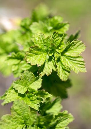 close up: Spring  green leaf, close up
