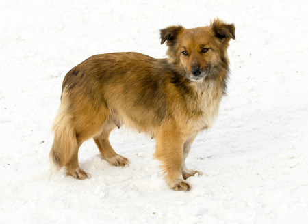 mongrel: mongrel dog on snow outdoors