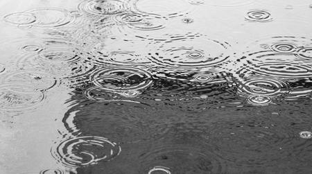 kropla deszczu: Zbliżenie kropel deszczu