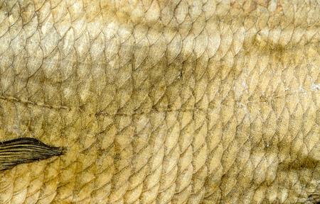 escamas de pez: escamas de pescado viejo fondo amarillo Foto de archivo