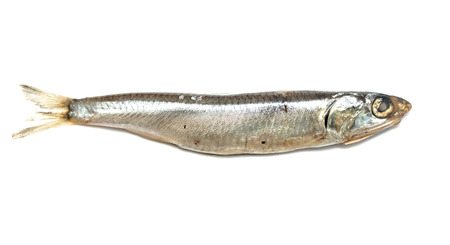 european anchovy: Black Sea anchovy fish isolated on white background