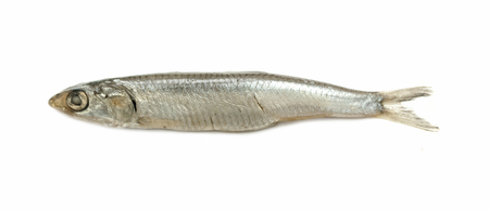 anchovy fish: Black Sea anchovy fish isolated on white background