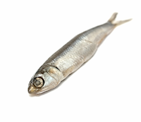 unsaturated: Black Sea anchovy fish isolated on white background