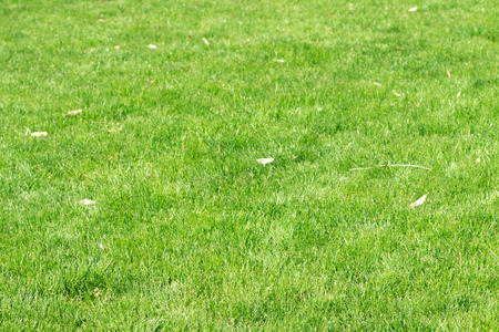 green background: green grass background, perspective