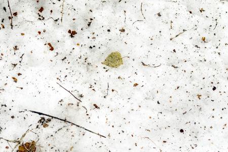 slushy: dirty snow in the garden in spring Stock Photo