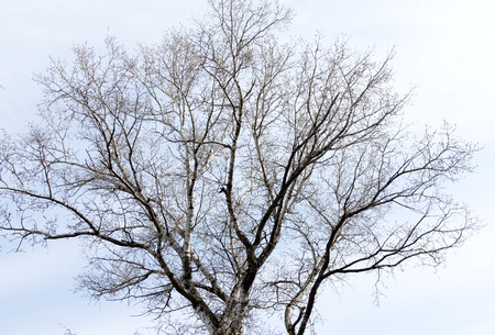 without: trees without leaves against the sky