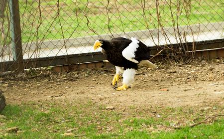 birds of prey: birds of prey close up in a zoo