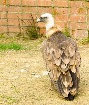 prey: birds of prey close up in a zoo