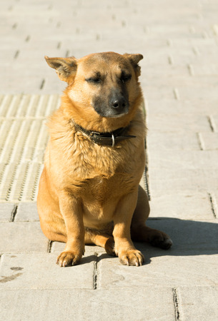mongrel: haired mongrel dog, close-up Stock Photo