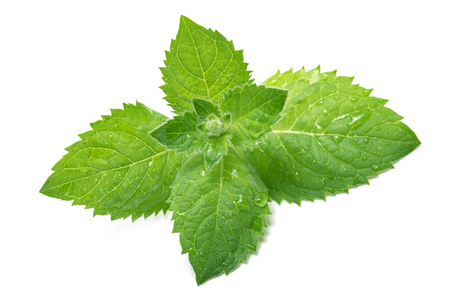 mint leaves on a white background Stock Photo
