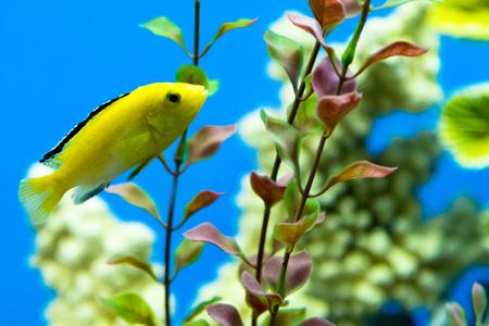 aquarium fish closeup