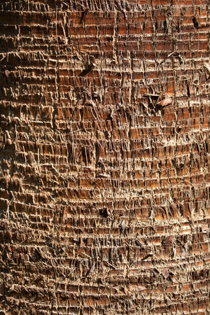 Palm Baumrinde Hintergrund Standard-Bild