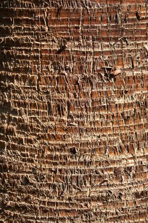 Palm Baumrinde Hintergrund