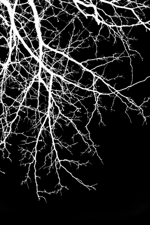 abstract, white tree branches on a black background, picture inversion