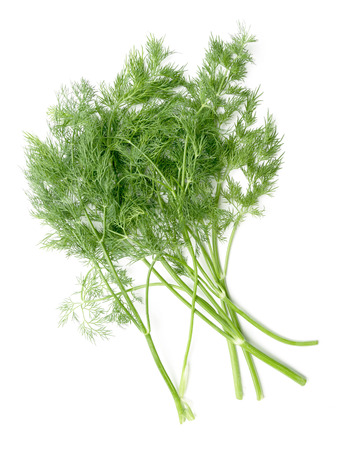 sheaf of green dill on a white background