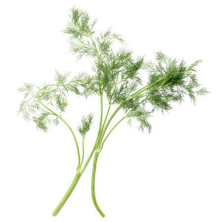 sheaf: sheaf of green dill on a white background