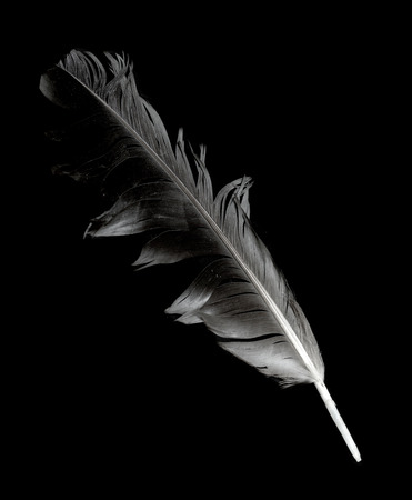 black feather: feather on a black background Stock Photo