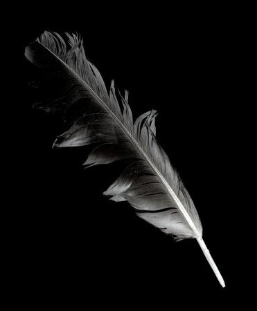plume sur un fond noir