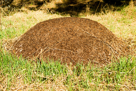 anthill in the woods Stock Photo