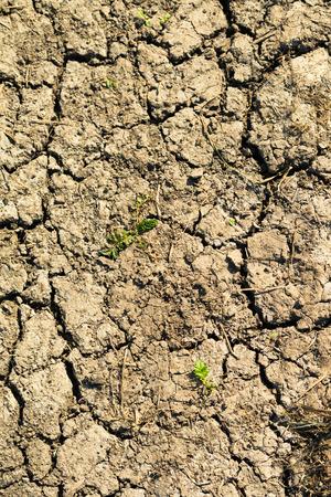 dry land: dry land with cracks nature Stock Photo