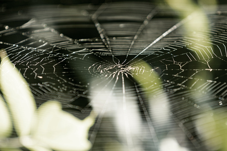 spiders web: a spiders web spider