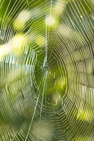 a spiders web spider