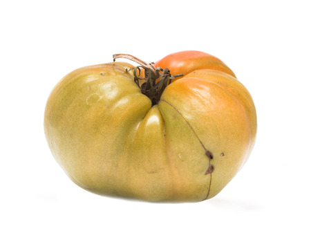 unripe: brown unripe tomatoes on white background