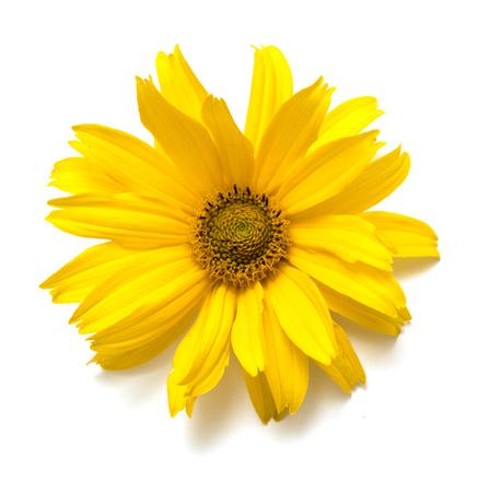 fiore giallo su sfondo bianco