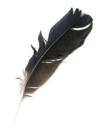 vogel veren op witte achtergrond