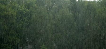 rain shower: rain shower view of the trees blurred background